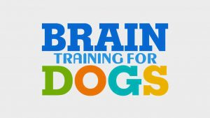 brain training for dogs scam